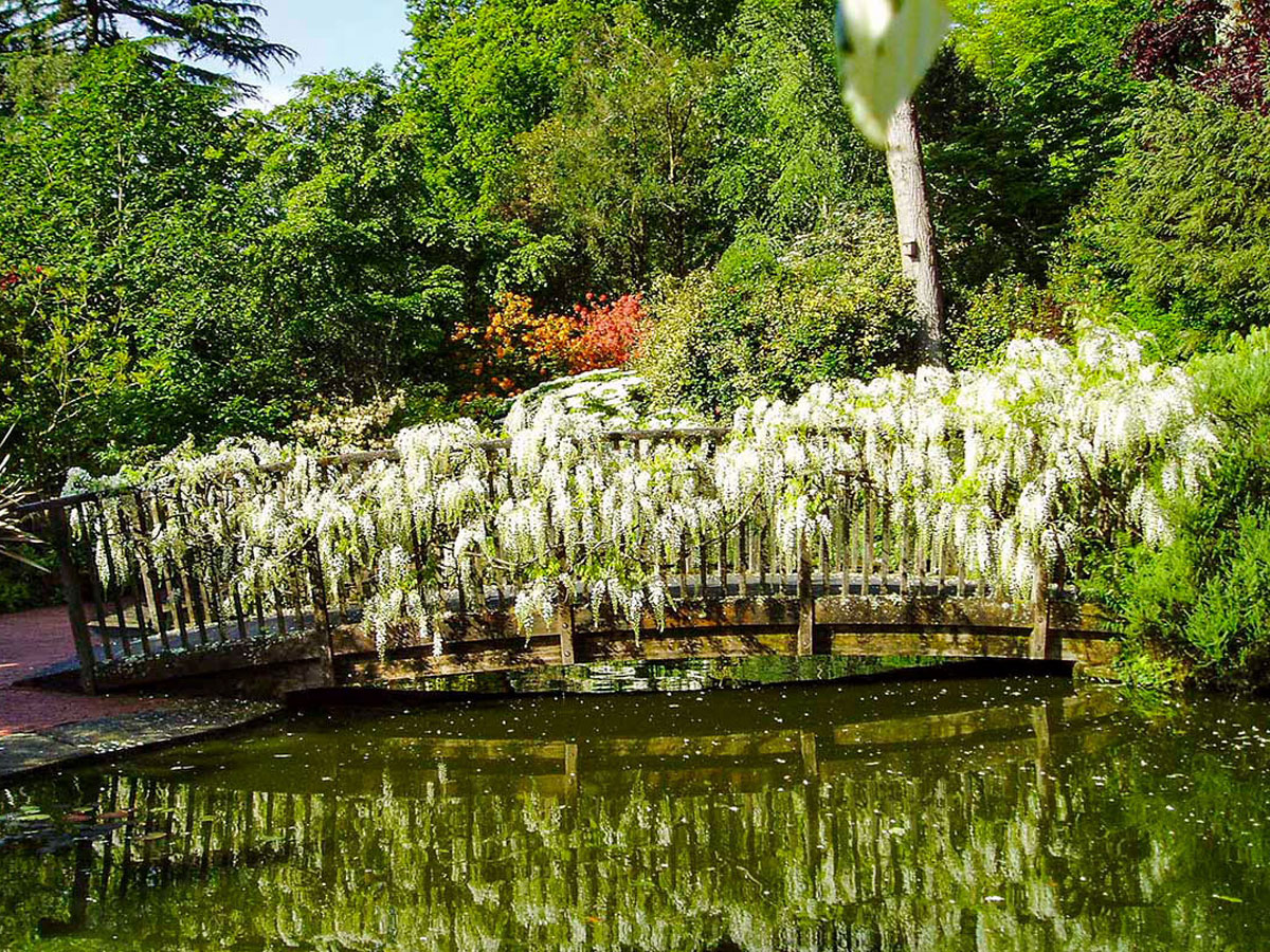 Bridge GardenFull of beautiful white scented wisteria and other sweet scents.
