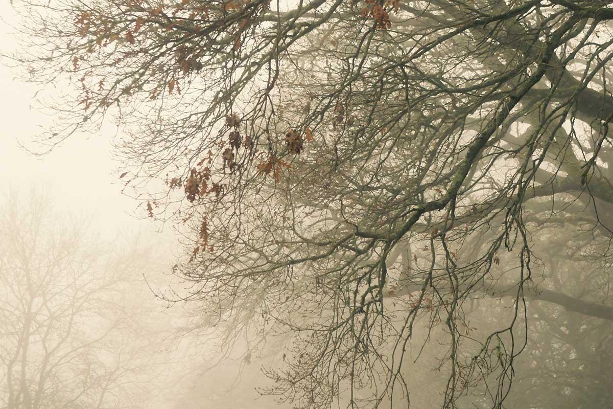 treeswintry2